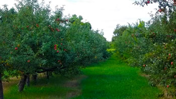 Timberland Hills Orchard